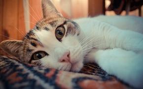 Картинка глаза, кот, Животные
