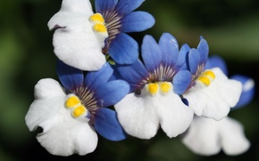 Картинка цветы, фон, бело-голубые