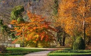 Картинка осень, деревья, дорожка, Autumn