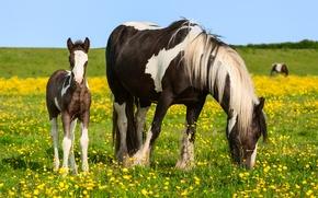 Картинка поле, лето, кони