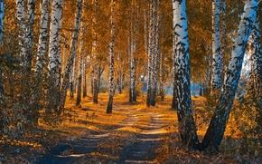 Картинка дорога, осень, лес, листья, пейзаж, природа, красота, березы