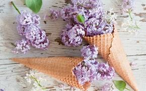Картинка цветы, flowers, сирень, lilac, вафельный рожок, waffle cones