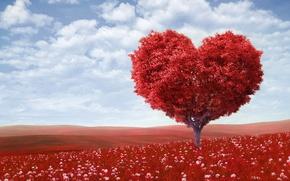 Картинка поле, небо, облака, любовь, цветы, дерево, романтика, сердце, love, День святого Валентина, sky, field, heart, …