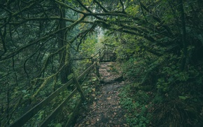 Картинка лес, деревья, тропинка, Washington, штат Вашингтон, Green River Gorge, Ущелье реки Грин-Ривер