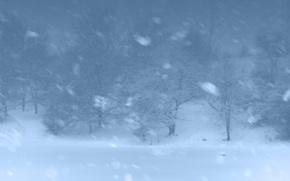 Картинка зима, лес, снег, деревья, метель
