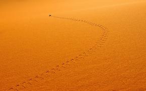 Обои след, насекомое, песок