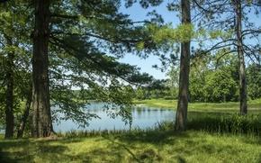Картинка лето, трава, деревья, озеро, США, Northern Illinois, Morton Arboretum