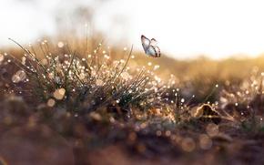 Обои капли, трава, роса, бабочка, макро, утро