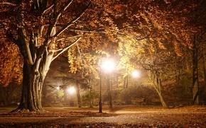 Картинка дорога, пейзаж, ночь, природа, lights, огни, парк, улица, фонарь, road, landscape, nature, night, park, street, …