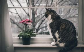Обои кошка, цветы, окно