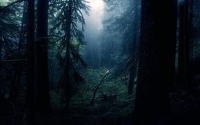 Обои ночь, свет, лес