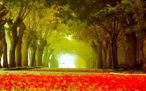 Картинка дорога, осень, листья, деревья, парк, аллея, скамья