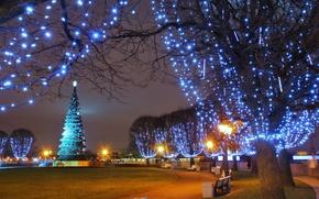 Картинка park, garland, парк, зима, lights, New Year, гирлянды, елка, night, сквер, фонари, winter