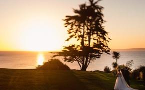 Картинка закат, дерево, невеста, жених