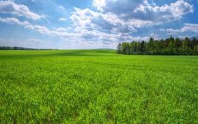 Картинка поле, небо, трава, облака, деревья, зеленая