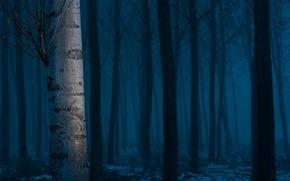 Картинка лес, снег, деревья