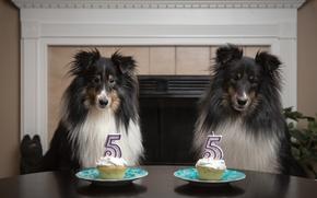Картинка собаки, день рождения, праздник