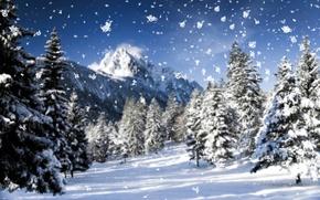 Картинка холод, зима, иней, макро, снег, деревья, горы, снежинки, природа, дерево, елки, елка, новый год, ель, ...