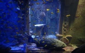 Картинка Atlantis, Aquarium, Bahamas, Paradise Island