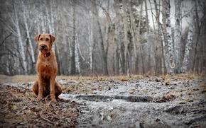 Картинка лес, друг, собака, весна