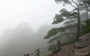 Обои Туман, забор, деревья