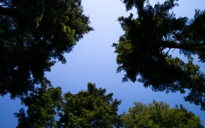 Картинка Nature, Sky, Summer, Sunshine, Forest, Trees, Woods, Cloudless, Pines