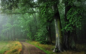 Обои германия,  оденвальд, лес, дорога