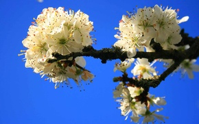 Обои небо, цветы, дерево, весна, сад