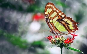 Картинка цветок, фото, бабочка, крылья, красивая, Mustafa Ozturk