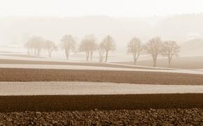 Картинка поле, деревья, пейзаж, туман, утро