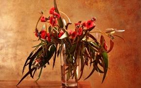 Картинка стекло, листья, вода, цветы, ветки, стол, ваза, эвкалипт