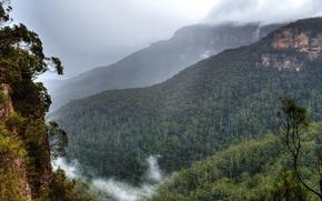 Обои облака, деревья, горы, туман, скалы, Австралия, Сидней, леса, Blue Mountains