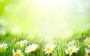 Картинка лето, трава, ромашки