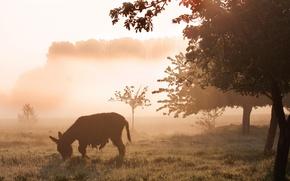 Картинка поле, природа, туман, утро, ослик