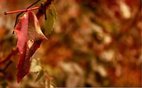 Обои красный, макро, лист, размытость, осень