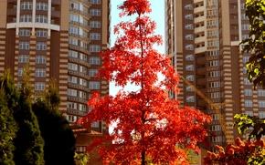 Обои дома, деревья, осень, город