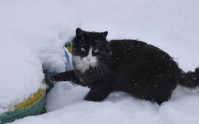 Картинка кот, снег, кошки, в снегу, cat, snow, cats, снежный кот