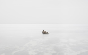 Картинка море, скала, птица