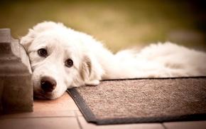 Картинка друг, собака, порог