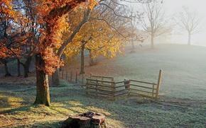 Картинка иней, осень, деревья, пень, ограда, холм, заморозки