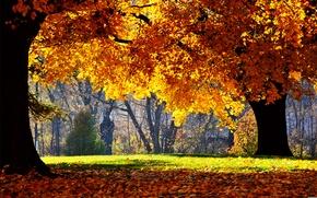 Картинка деревья, природа, парк, фотографии, листопад, осень листя