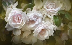 Обои текстура, лепестки, розы