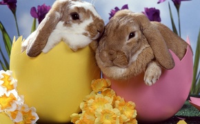 Обои яйца, пасха, цветы, Кролики