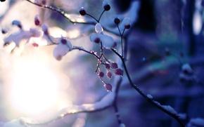 Картинка зима, солнце, макро, снег, деревья, ветки, фон, дерево, розовый, обои, растение, размытие, wallpaper, широкоформатные, background, ...