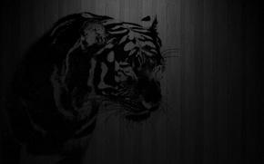 Картинка тигр, фон, трафарет, Разное