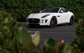 Картинка Jaguar, White, F-Type