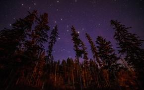 Картинка лес, звезды, свет, деревья, пейзаж, ночь