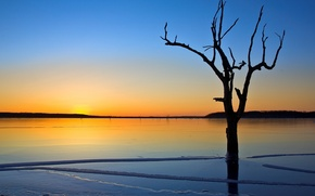 Обои лед, озеро, дерево