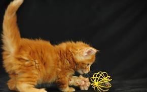 Обои кошка, игра, малыш, котёнок