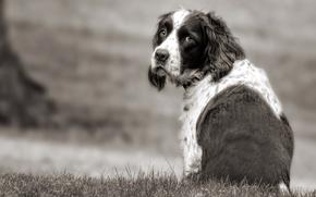 Обои грусть, взгляд, друг, собака